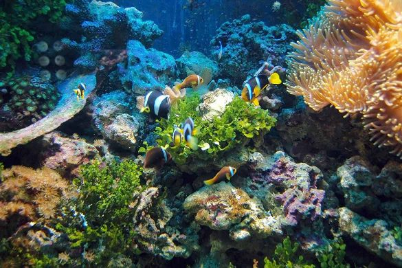 Red-Sea-Reef